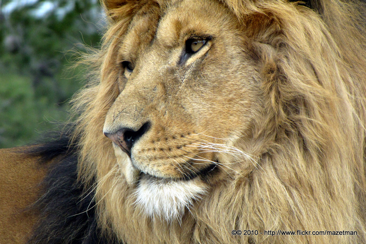 We Need our Roaring Lions - Jacque Watkins - photo#18