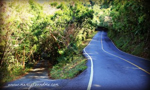 For When You Come to a Fork in the Road {How to Pick Your Path}