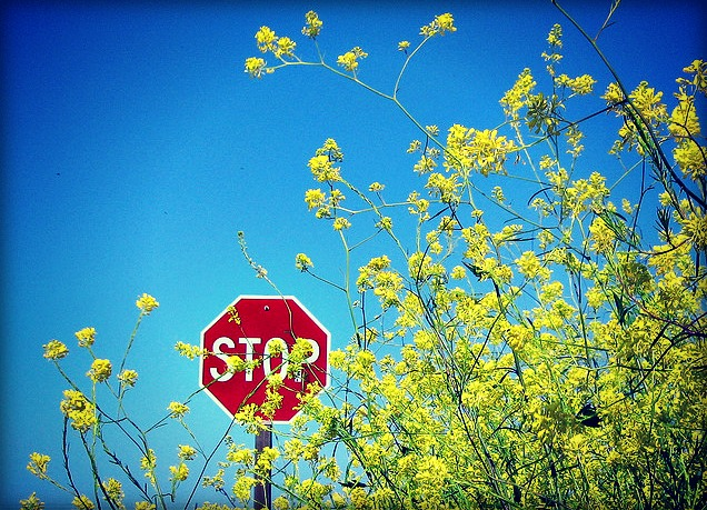 Stop Sign Yellow Flowersb