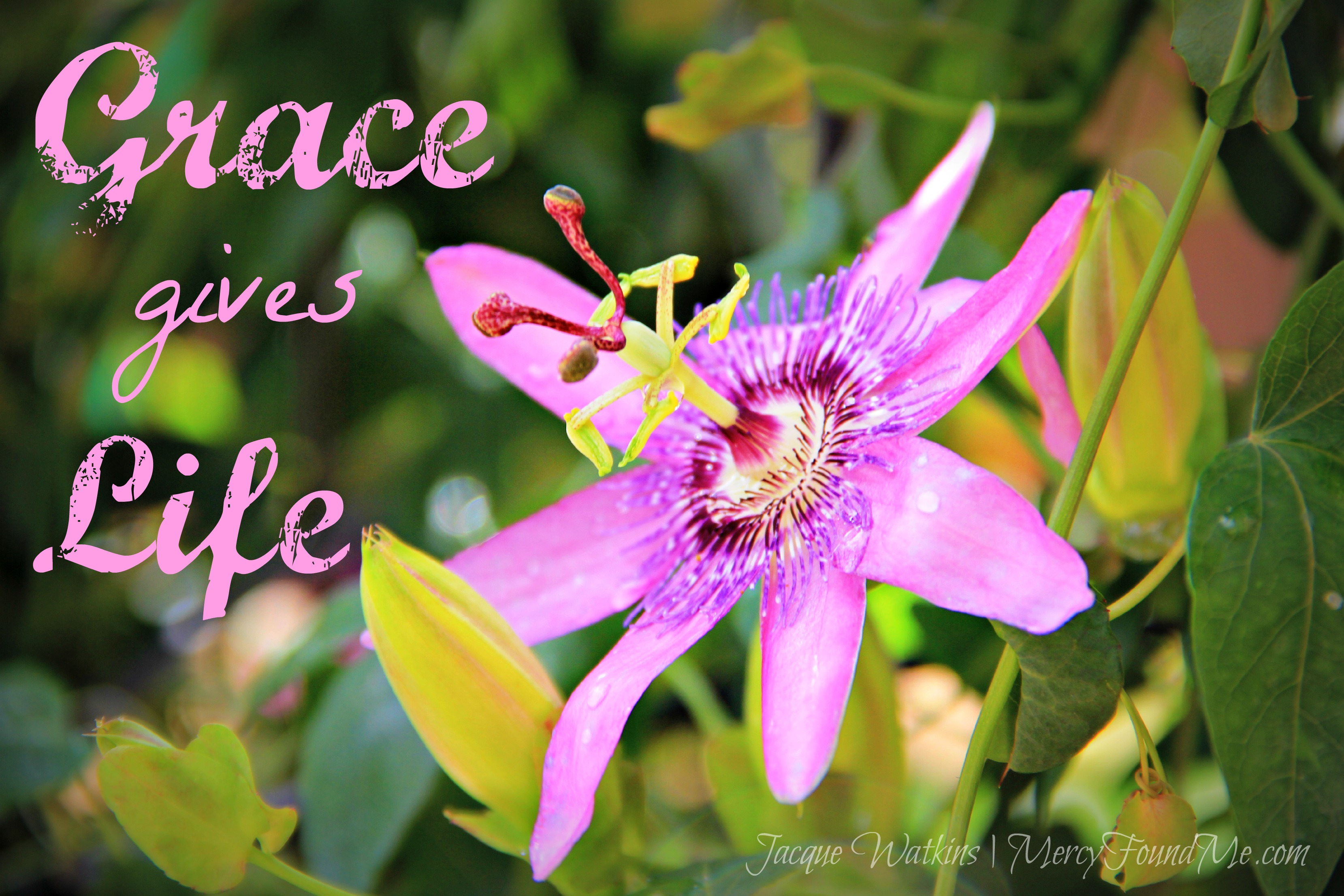 Selfishness is Sin, But Grace Gives Life :: Sermon on the Mount {Week 18 & 19}
