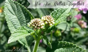 We Are Better Together :: The Romans Project {Week 1}