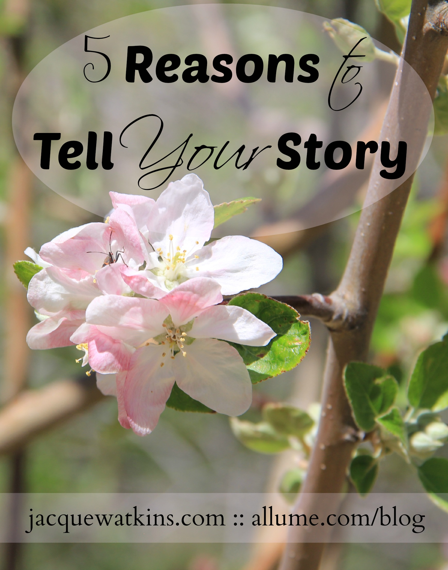 Five Reasons to Tell Your Story {Allume}