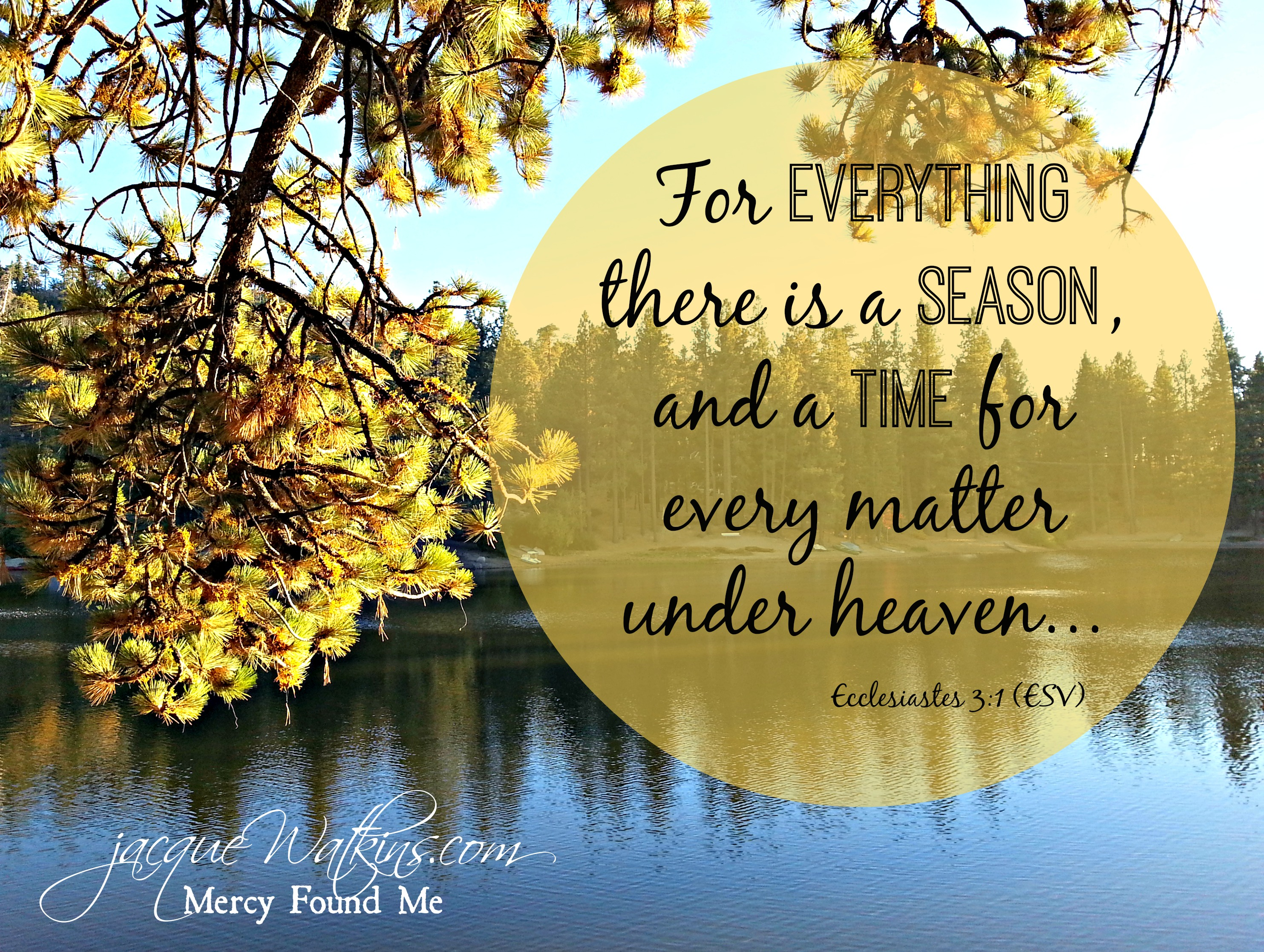 To Slow in This Season, and Reflect